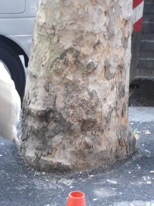 Omicidio di un albero