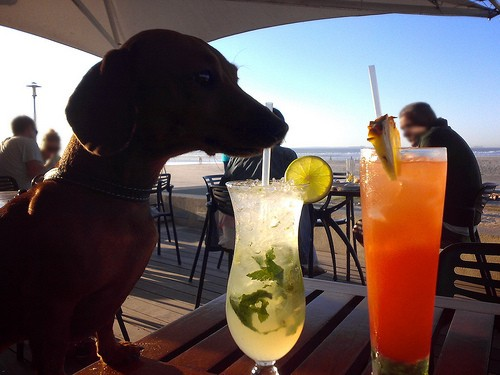 Doggy happy hour