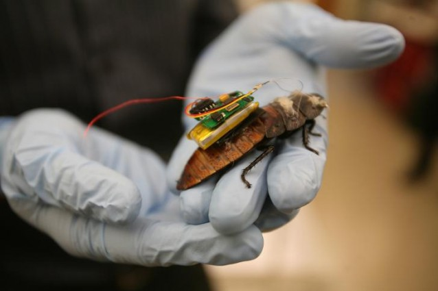 scarafaggi-computer-chip-638x425