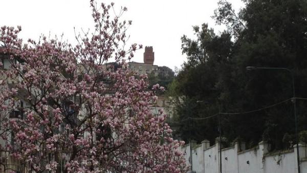 colline-in-fiore-600x338