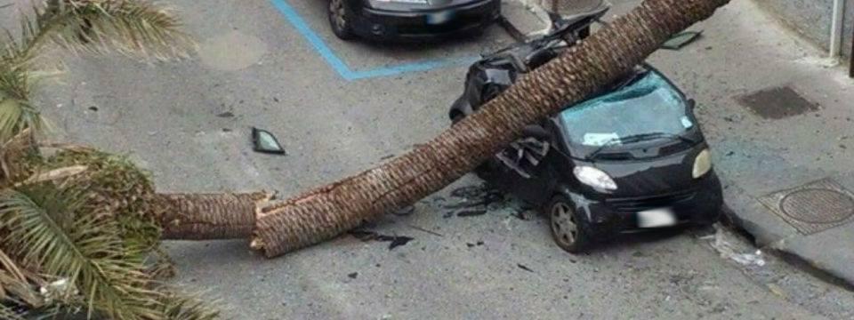 albero-caduto-via-solimena