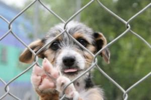 cucciolo-di-cane-randagio