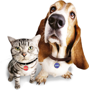dog_cat_id_tags