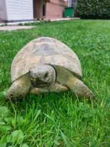 una-delle-tartarughe