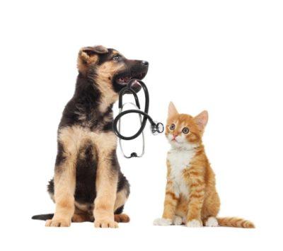 assicurazione-cane-assicurazione-gatto-animali-domestici-1024x909