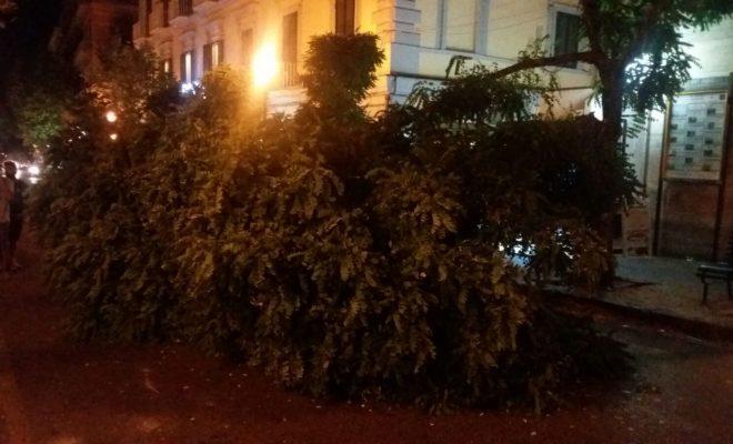 albero in via Cimarosa