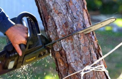 potatura alberi-2